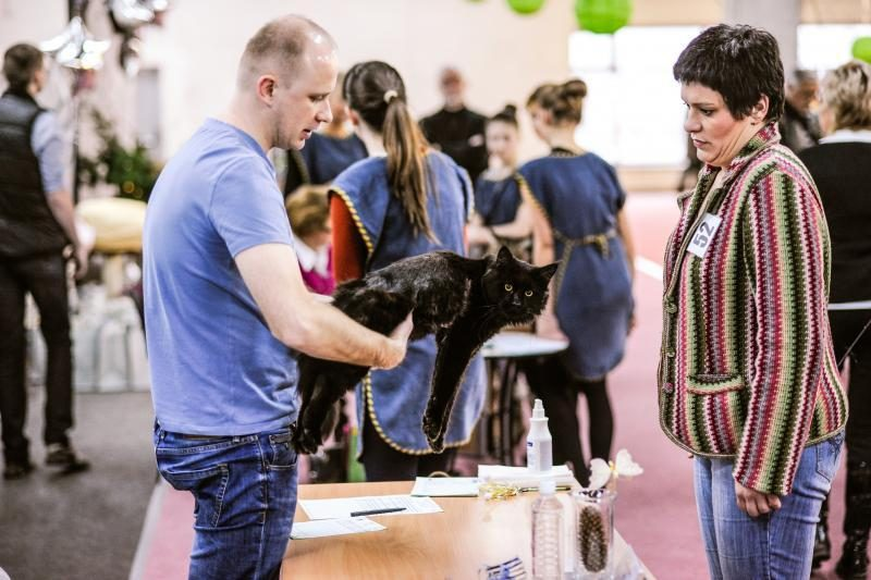 Kačių parodoje Kaune triumfavo ilgauodegis Meino meškėnas