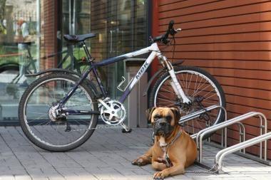 Klaipėdiečiai sulaikė dviračio vagį
