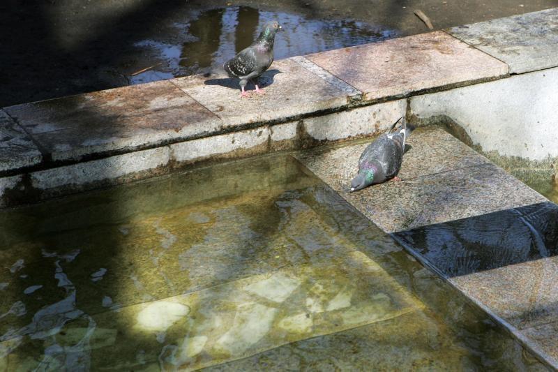 Atgijusiuose fontanuose – miestiečių maudynės