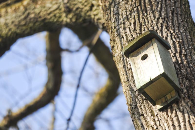 Sostinės varnėnai gali likti be naujų namų