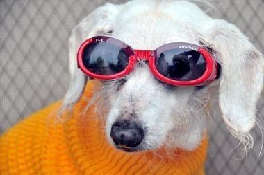 Seniausias pasaulio šuo atšventė 21-ąjį gimtadienį