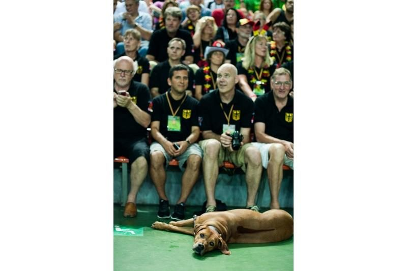 Halėje iškilmingai pradėtas Europos veteranų krepšinio čempionatas