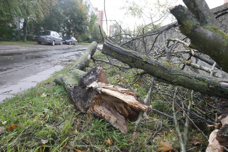Sustiprėjęs vėjas penktadienio rytą pajūryje vartė medžius