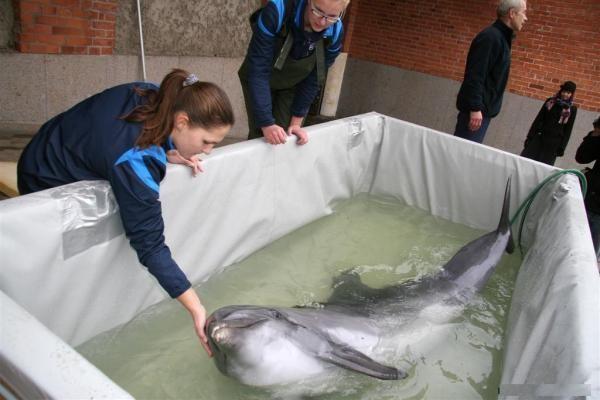 Lėktuvas su delfinais jau pakeliui į Graikiją (papildyta)