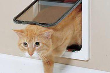 Britanijoje – elektroninių durų katėms bumas