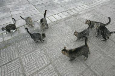 Šovė į katę, pataikė į kaimynę