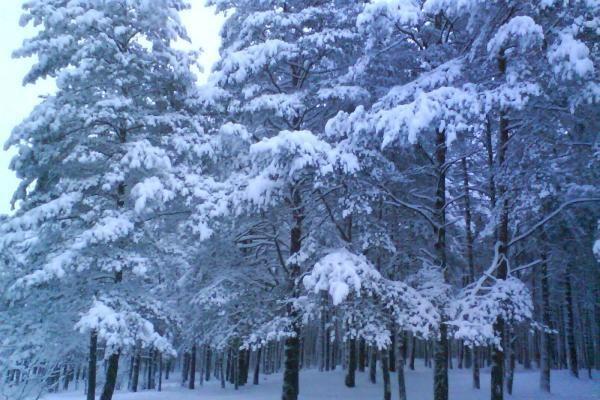 Žiemos išdaigos ir kerai