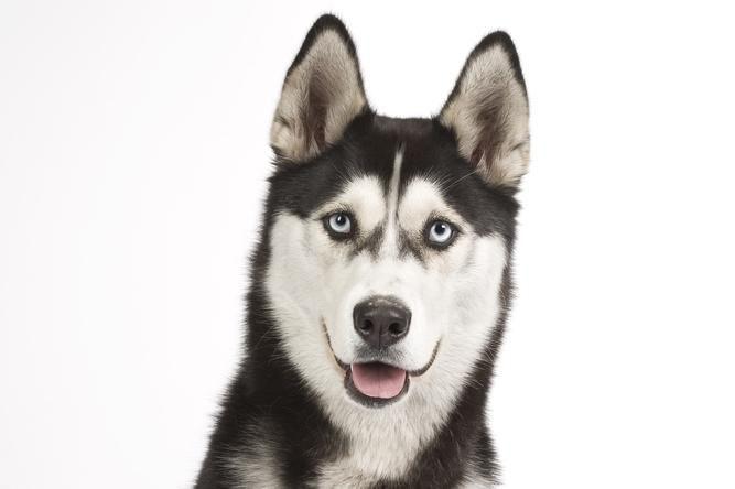 Šuo jau metus laukia emigravusio šeimininko