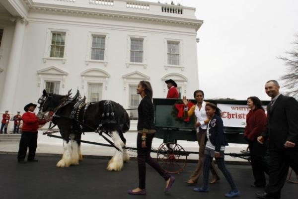 Baltųjų rūmų Kalėdų eglė atvežta arklio traukiamu vežimu