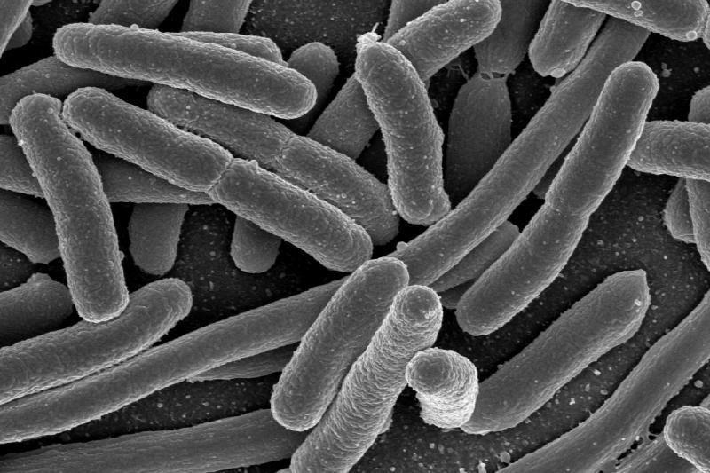Mirtinas E. coli protrūkis Vokietijoje baigėsi