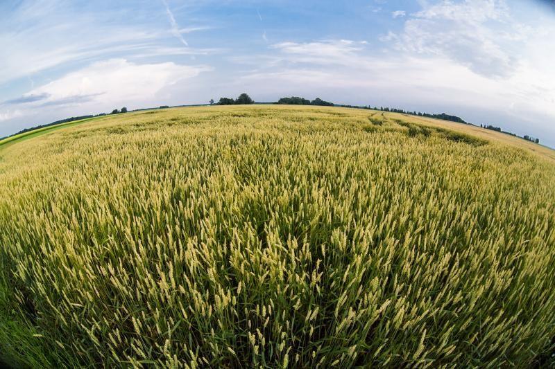 Derybų dėl draudimo parduoti žemę užsieniečiams pratęsimo nebus