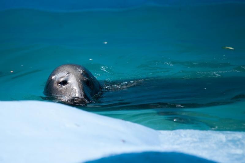 Per karščius lokiui Kasparui – ledinės žuvys