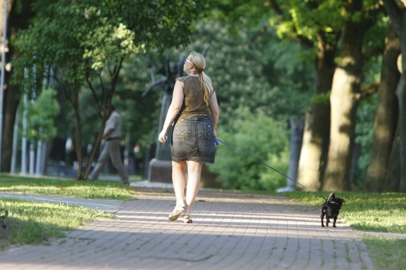Klaipėdos gyvenamuosiuose rajonuose – tyliosios zonos