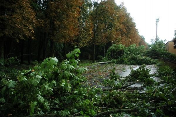 Škvalas Kauno rajone nuniokojo miškus