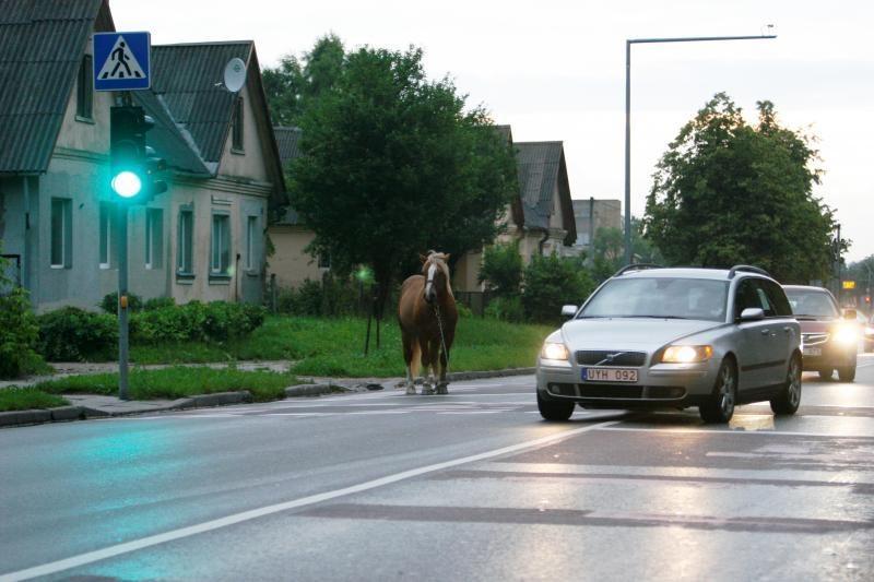 Po sostinę blaškėsi supančiotas arklys