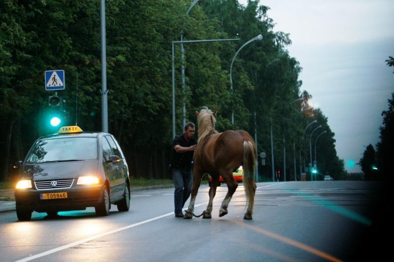 Palangoje automobilis susidūrė su arkliu