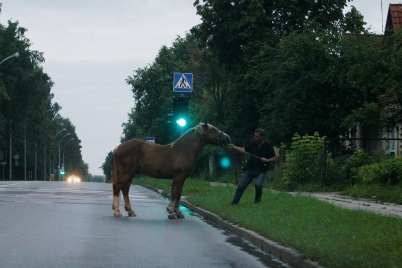 Kretingos rajone pavogtas arklys