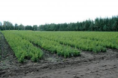 Biokuro plėtotojams – naujos galimybės
