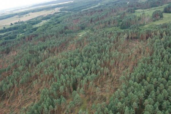 Miškininkai: Lietuvos miškų suniokota daugiau nei manyta