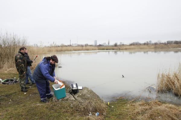 Tvenkinyje prie Šilutės plento - negyvos žuvys