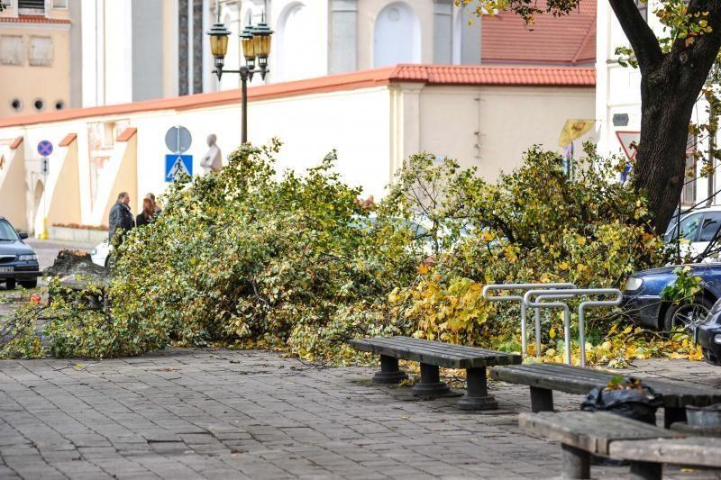 Vėjo išversti medžiai    nuklojo Kauną