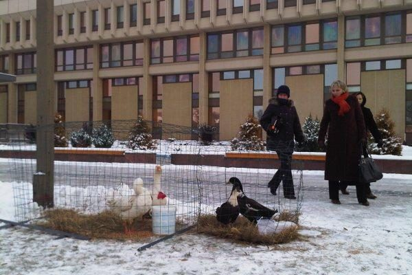Prie Seimo - kalėdiniai ūkininkų turgeliai
