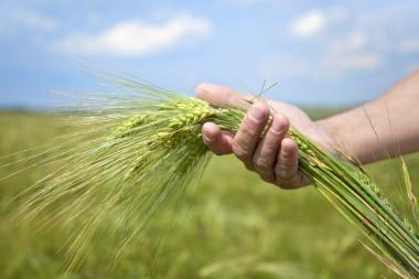 Ūkininkai siekia išvengti išankstinių grūdų pardavimo sutarčių vykdymo