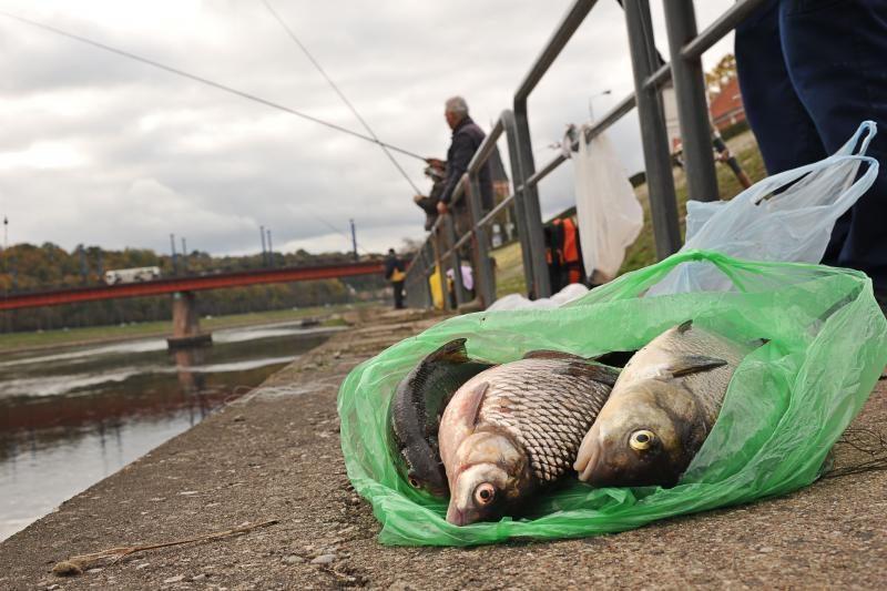 Nemuno krantinės žvejai žuvį vilioja žole