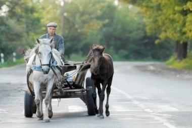Šilutės rajone pavogtas dar vienas arklys