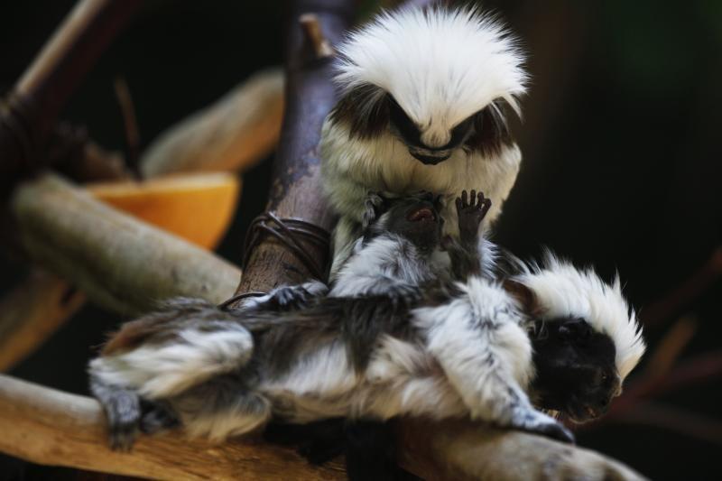 Mielumo įsikūnijimas: planetos gyvūnų jaunikliai