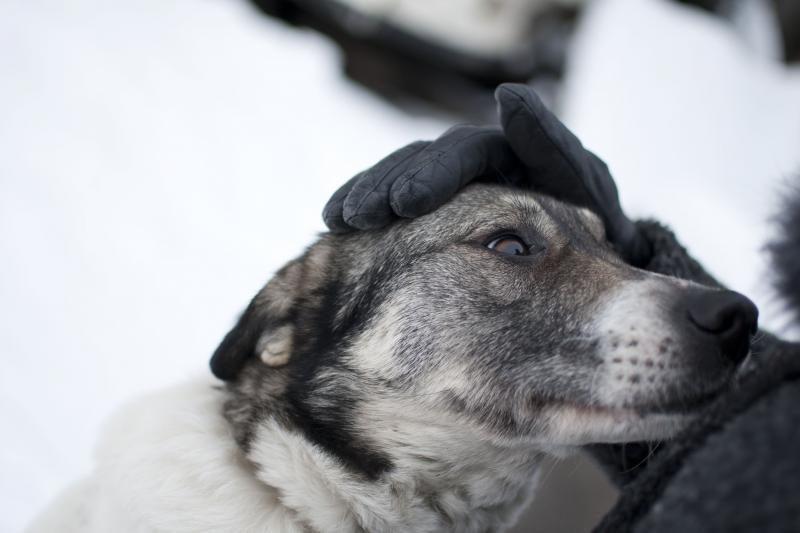Žiaurus elgesys su gyvūnais: Utenos rajone pakartas šuo