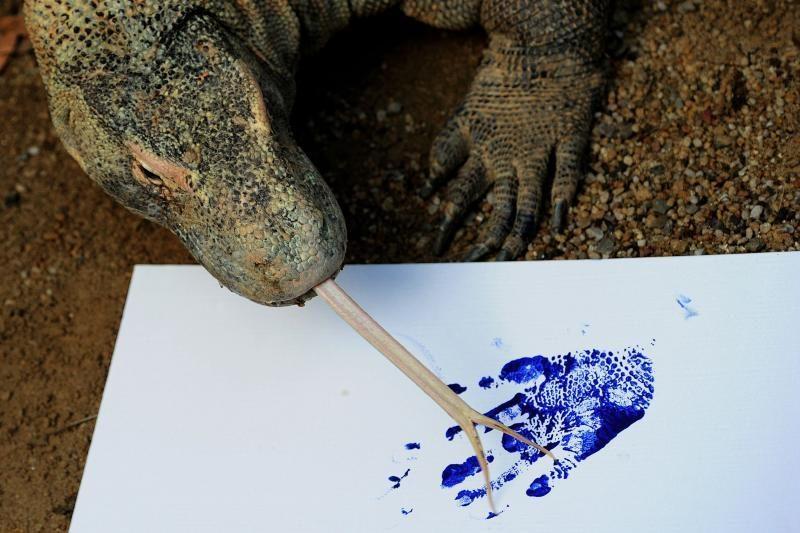 Zoologijos sodo gyvūnai paliko pėdų atspaudus popieriuje