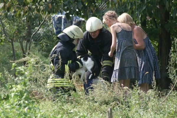 Šunų prieglaudoje – katės gelbėjimo operacija