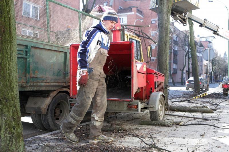 Uostamiesčio medžių genėjimui prireiks 53 tūkst. litų