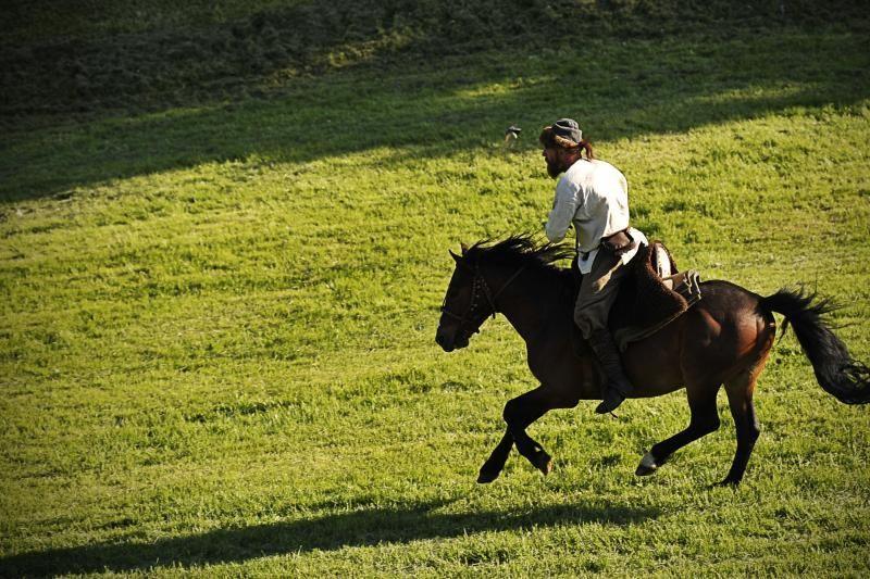 Per Kauno šventę arklys paauglei nukando dalį ausies