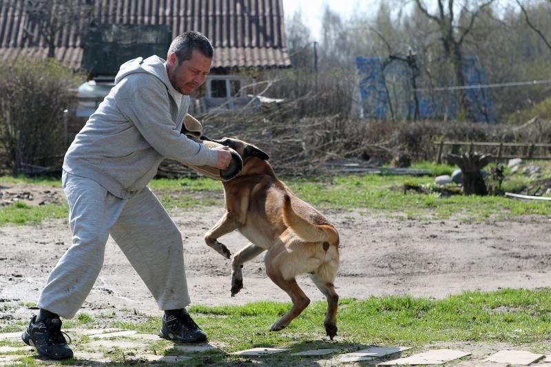 Šunų dresuotojui tenka auklėti ir jų šeimininkus