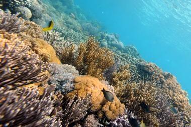 Pasaulio koraliniai rifai iki 2050-ųjų gali visiškai išnykti