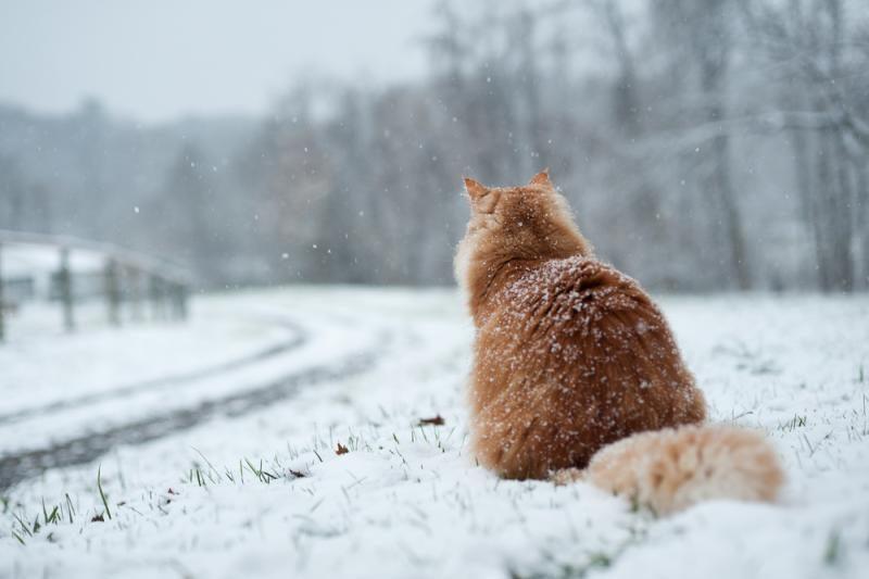 Nuo sekmadienio orai ims        šalti