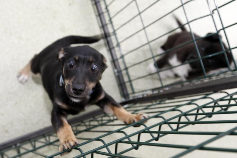 Visuotinio mokesčio už šunis ir kates kol kas nebus