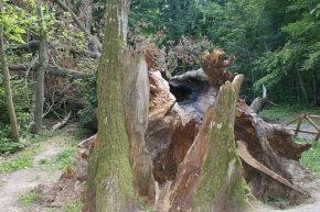 Vakarų Lietuvoje virto medžiai