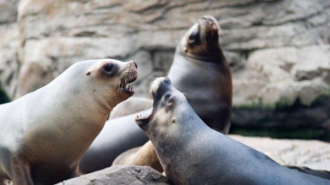 Per tris dienas jūra prie Klaipėdos išplukdė šešių ruonių kūnus