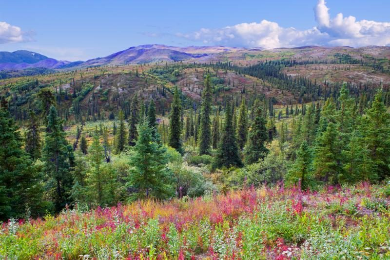 Aliaskos laukiniame rojuje pažintis su lokiu baigėsi tragiškai