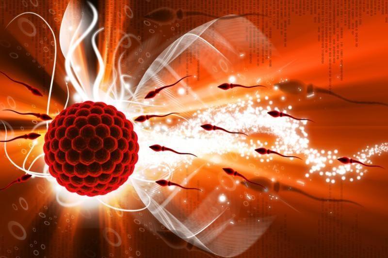 Radiacija nuo bevielio interneto gali sulėtinti spermatozoidų aktyvumą