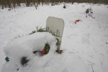 Kapinėse – lapių užkandinė