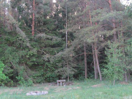 Skelbimas - Jauki sodyba nuosavo miško apsuptyje