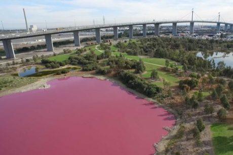Atrakcija turistams – rožinis ežeras