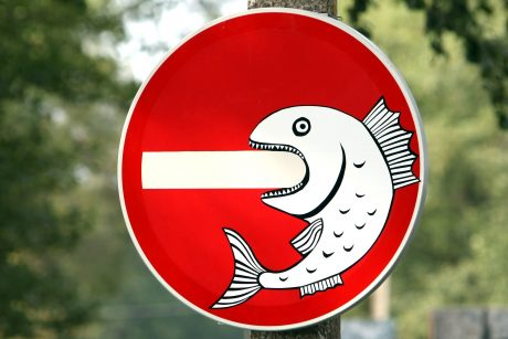 Lydekas žvejoti bus galima jau rytoj, bet karšių – ne