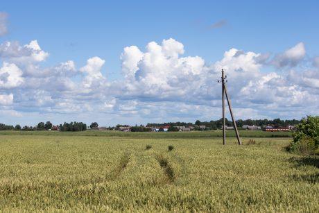 V. Pranckietis: klaida dėl žemės pirkimo ribojimo bus ištaisyta