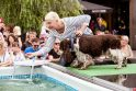Šunų šuolių į vandenį turnyras