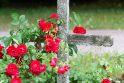 Naujovė: Klaipėdos kapinėse atsiras vieta, kur bus laidojami neišgyvenę embrionai.
